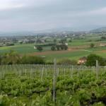 vignet-umbria-vini-biologico