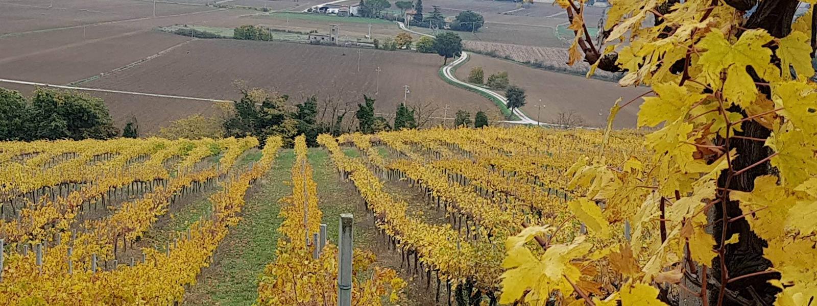 vini-naturali-cantina-rossi