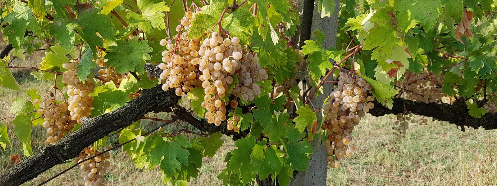 slide_vino-biologico_130