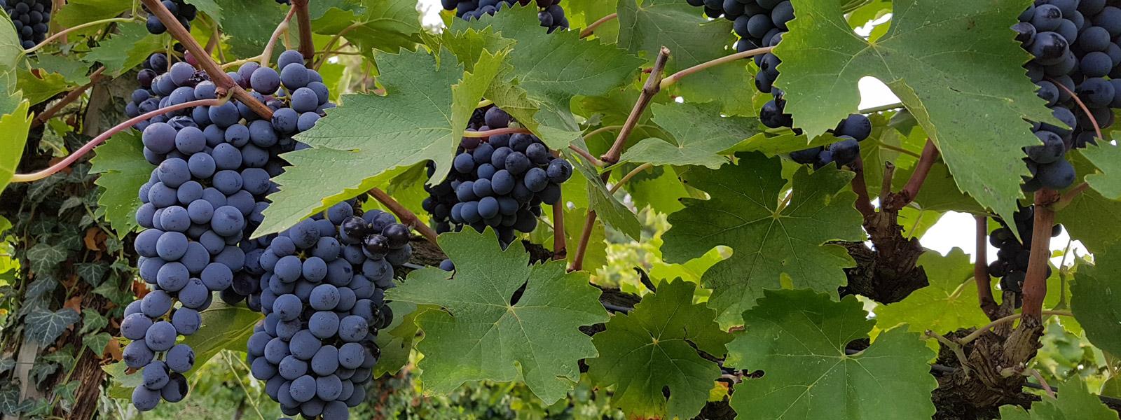 slide_vino-biologico_924