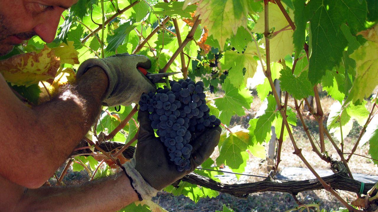 vigna-vini-naturali-biologici