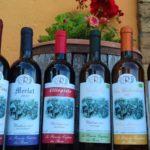 Grande offerta d'estate vini bio-naturali in bottiglia: promozione estate 2020
